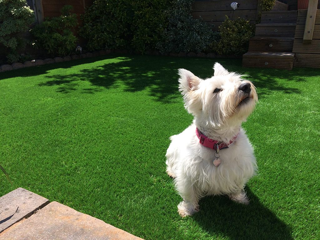 Pets Artificial Grass - Artificial Grass Hampshire, UK